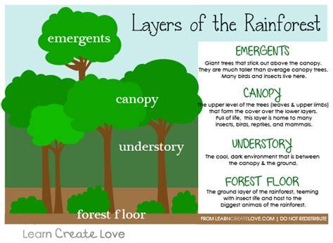 Layers Of The Rainforest Worksheet Meningrey