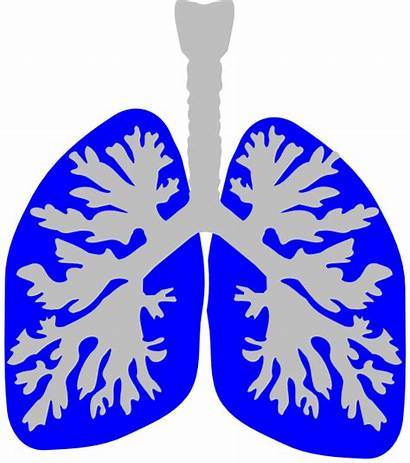 Lung Lungs Clip Clipart Vector Clker Clipartmag