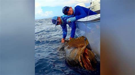 goliath grouper catch father reel pounds sons 2000 fish lifetime poirier fishing robert vs reeled course fox29 caption fox