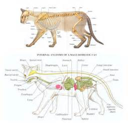 anatomy of a cat feeding kittens step by step advice