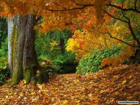 lurve autumn