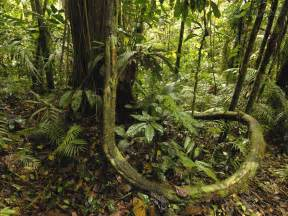 тропические леса в опасности фото