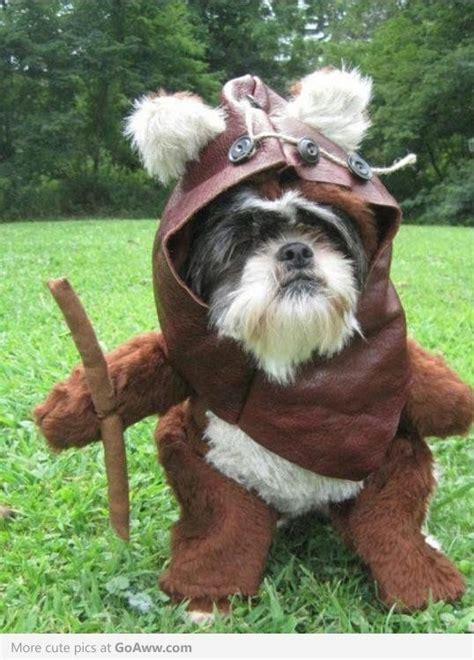 It's an Ewok for Halloween   Dog halloween, Dog halloween ...