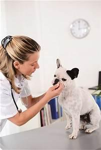 Working with animals : Career Outlook: U.S. Bureau of ...