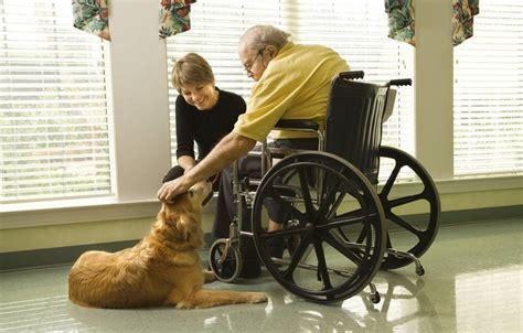 therapiehunde funktion und einsatz agila