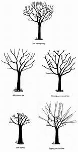 History Of Apple Trees