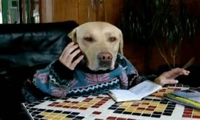 Dog Meme Gifs Funny Dogs Hilarious Weird