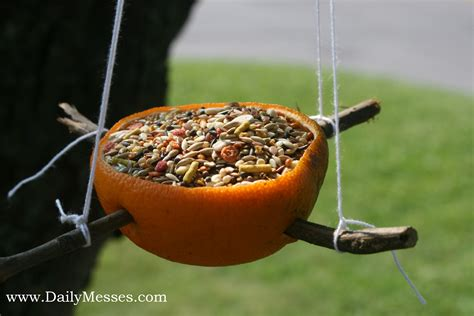 patent pending projects biodegradable bird feeder project