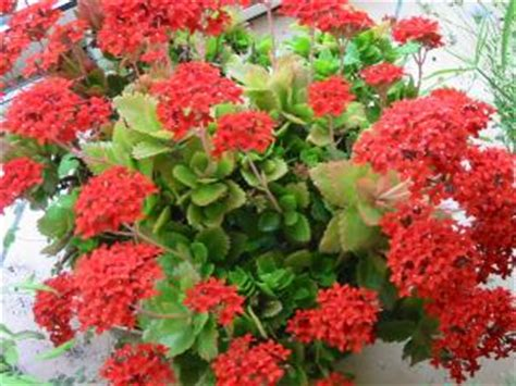 culture de plantes en pots