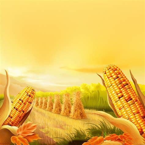Thanksgiving Corn Farm