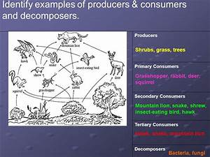 Unit 3 Ecosystems. - ppt video online download