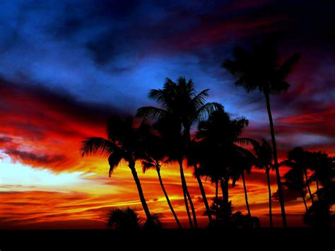 palm tree sunset ilovepics flickr