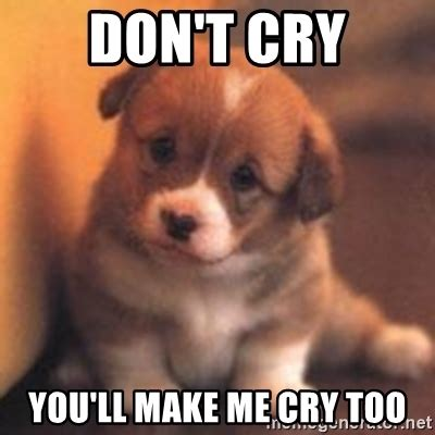 Dont Cry Meme - don t cry you ll make me cry too cute puppy meme generator