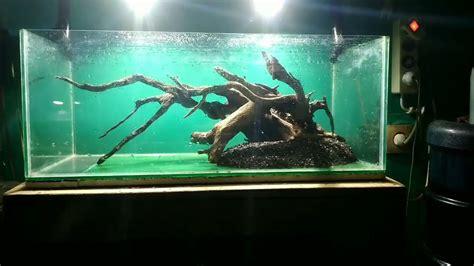 membuat aquascape natural sederhana  tech nature