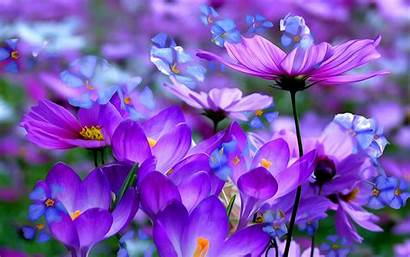 Spring Flowers Purple Definition Wallpapers 4k Yodobi