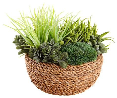 wall decor target australia air plant in rattan basket contemporary plants other