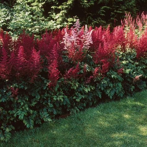 Garten Schatten Pflanzen by Schattenpflanzen In Prachtvollen Farben F 252 R Einen