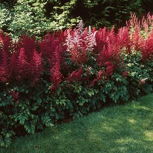 Schattenpflanzen Garten Winterhart : schattenpflanzen in prachtvollen farben f r einen ~ Lizthompson.info Haus und Dekorationen
