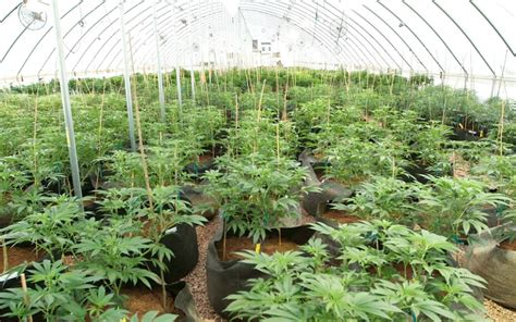 Industrial Real Estate Impacts From A Flourishing Cannabis