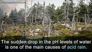 Acid Rain Prevention