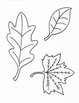 Leaves Coloring Printable Pages Leaf Oak Print Fall Colour Stencil Sheets Colouring Stuff Without Samples Tree Popular Yofreesamples sketch template