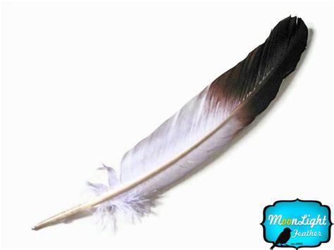 pagani drawing native american eagle feather drawings
