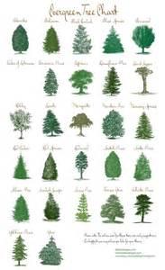 Most Popular Christmas Trees Types best 25 evergreen ideas on pinterest full sun shrubs
