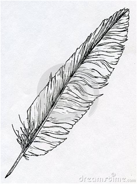 single feather drawn  ink royalty  stock photo