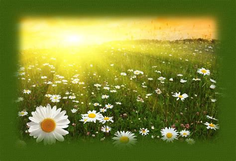 summer solstice blessing