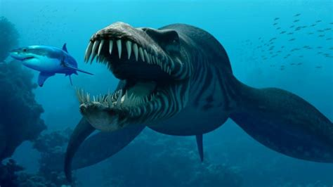 Mysterious Creatures of the Mariana Trench - WORLD MYSTERIES