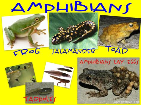 pictures  amphibians  animal picture society