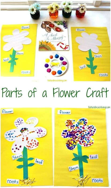 the best parts of a flower craft for let s learn 231 | ee1799272cf913381e72ce7743b4dd9f