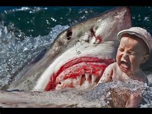 Great White Shark Eating Person