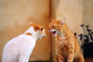 cat noise cat sounds