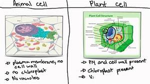 Ib Biology Topic 2 3 5 Animal Cell Vs Plant Cell