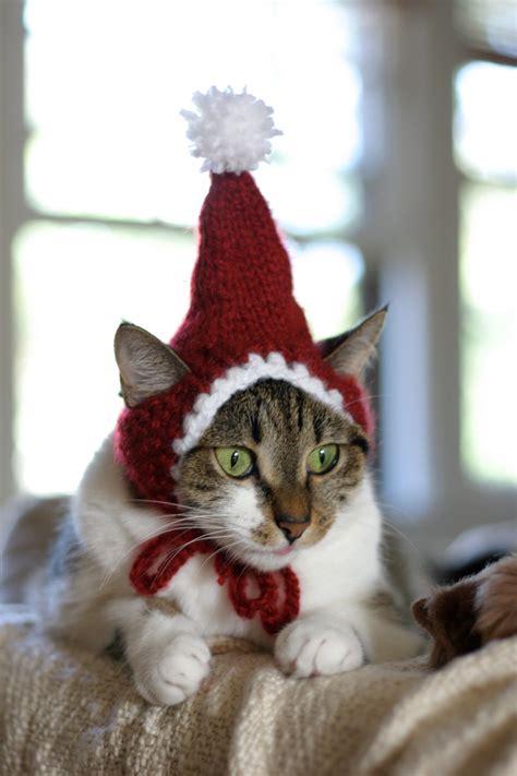 cat santa hat the santa cat hat
