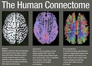 Brain Wiring Diagram