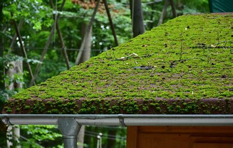 Roof Moss Removal Vancouver, Wa Roofing Contractors St Petersburg Florida Can You Put A Metal Roof Over 3 Layers Of Shingles Most Energy Efficient Design What Is The Best Certainteed Or Gaf 2 How Much New On Terraced House High Top Van Installers Uk Red Inn 4940 W Ina Rd Tucson Az 85743 Plus In Alexandria Va
