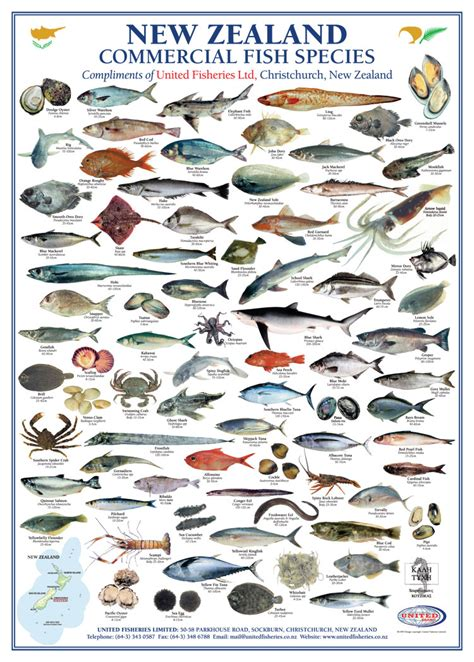 sea fish pictures  names wallpaperzenorg