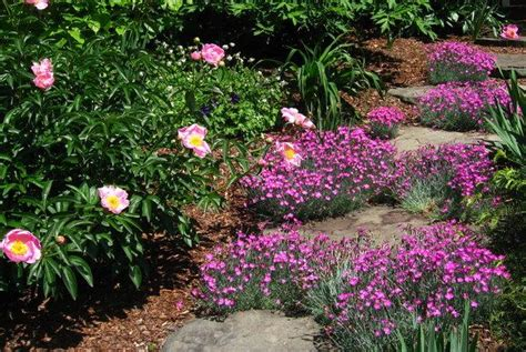gail gee s maryland garden in may gardens
