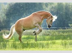 Paarden fotografie seasonsphotography