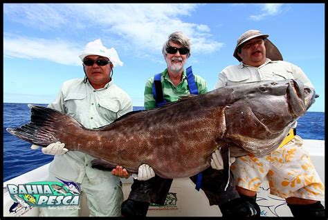fishing grouper bottom snapper reels conventional