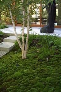 jardin japonais quelles plantes et arbres pour un jardin With quelles plantes pour jardin zen