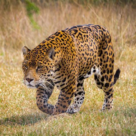 Jaguar habitat, CIA black sites, and deadly insurance ...
