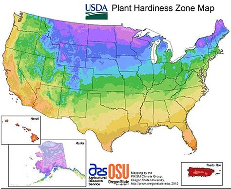 What Planting Zone Do I Live In? Learn What The Usda
