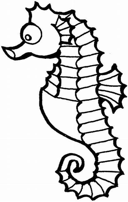 Sea Horse Clipart Clip Seahorse Cliparts Printable
