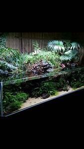 Pflanzen Terrarium Einrichten : mini paludarium aquarium terrarium aquarien und planted aquarium ~ Watch28wear.com Haus und Dekorationen