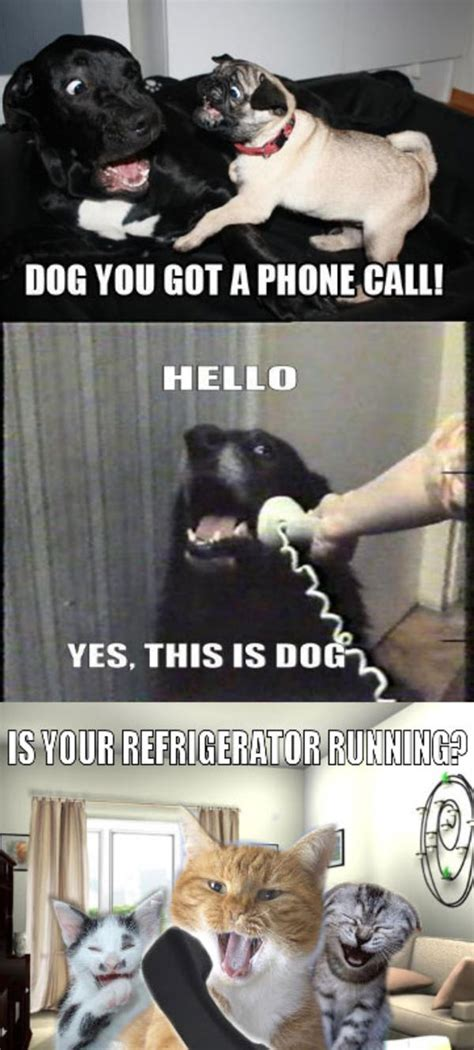 Yes This Is Dog Meme - image 205666 yes this is dog know your meme