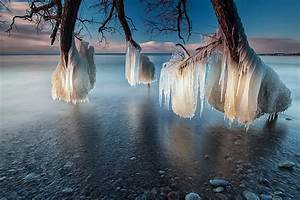 Frozen trees on the shores of lake ontario tobystereo for Frozen trees on the shores of lake ontario