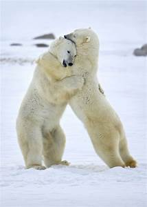 Top 7 Photos Of Animals In Love  A Tribute To Valentines Day